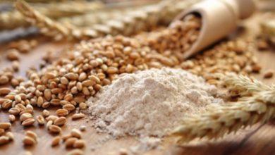 Le Gluten est-il LE plus toxique dans une croquette pour chien ?