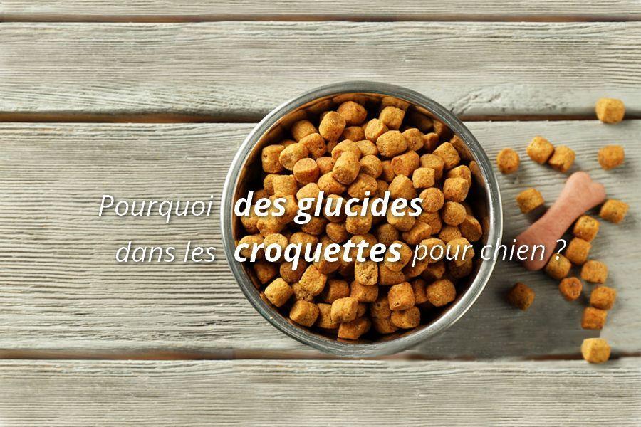 Le Role Meconnu Des Glucides Cereales Dans Les Croquettes Pour Chien