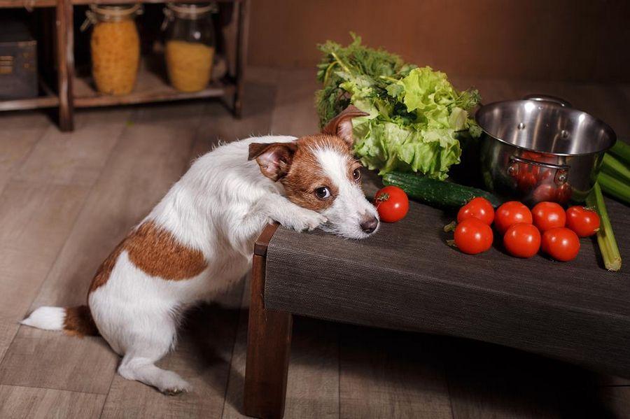 ATTENTION : certains légumes pour chien peuvent être toxiques !
