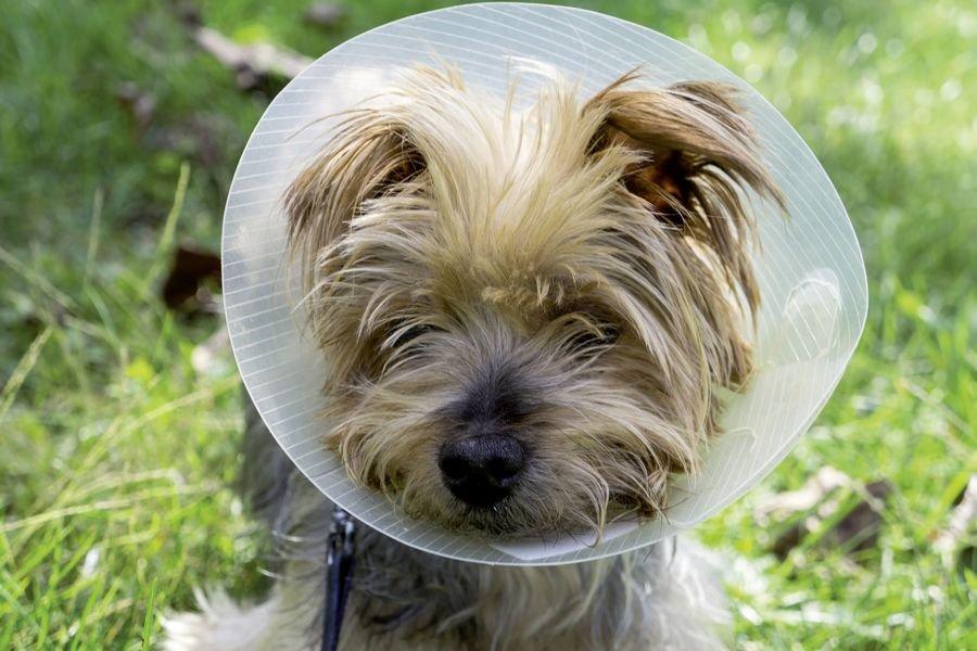Mon chien se gratte : Le meilleur traitement naturel en 3 points !