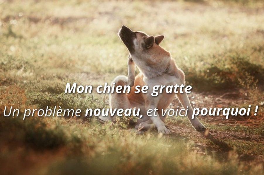 Blog sant du chien est il malade de ses croquettes pour chien dermatite du chien - Pourquoi un coup de soleil gratte ...