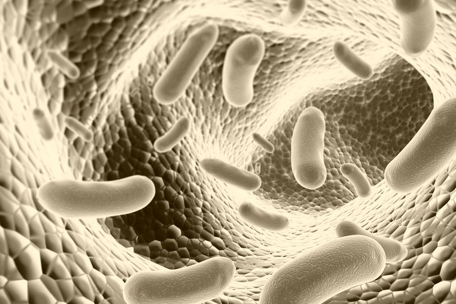 """Résultat de recherche d'images pour """"probiotique pour animaux"""""""
