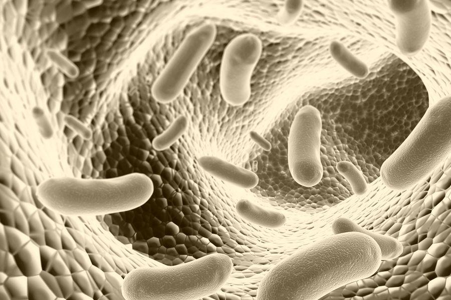 Probiotique pour chien : mode ou arnaque ? Point de vue de l'éleveur