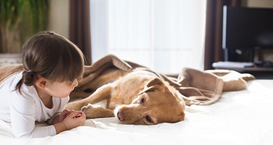 chien_malade_insuffisance-renale_du_chien
