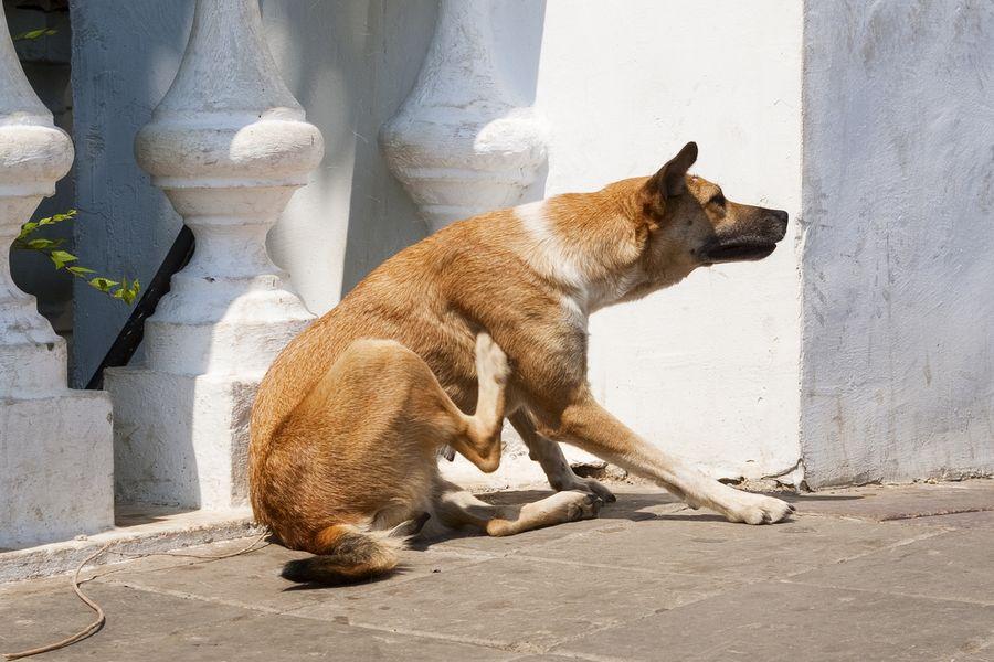 La dermatite du chien, un problème de peau nouveau et voici pourquoi !