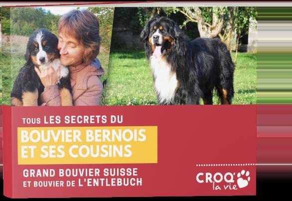book-header-lp-bouvier-bernois