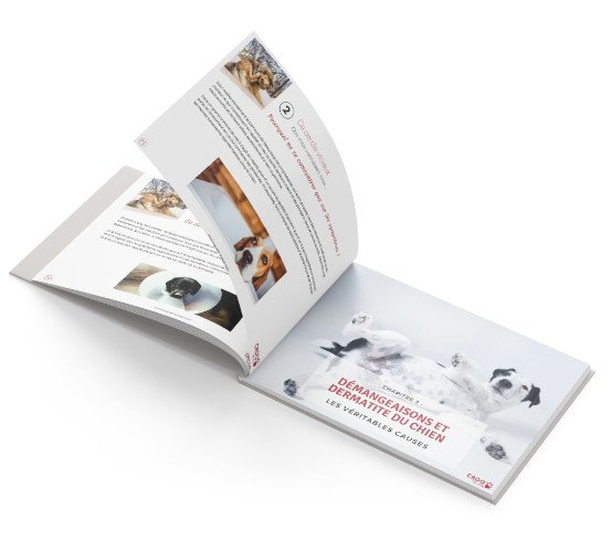 open-book-bg-lp-dermatite-light