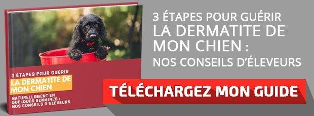 Dermatite Atopique Du Chien Et Traitement Naturel Par Lorigine